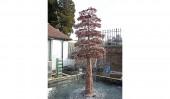 Малое дерево «Бонсай» (Small Bonsai Tree)
