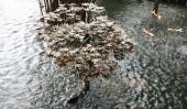 Дерево-фонтан «Японский клён» (Japanese Maple Tree)